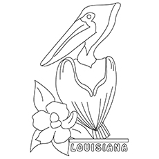 Photo Collection Pelican Coloring Page Birds