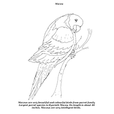 Macaw Coloring Page - Macaw