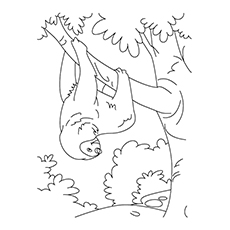 Sloth Coloring Page - Maned Sloth