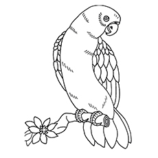 Macaw Coloring Page - Military Macaw