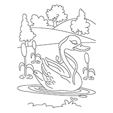 Swan Coloring Pages - Mute Swan In A Lake