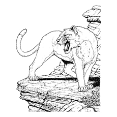 Coloring Page Of A Mountain Lion Coloring Pages