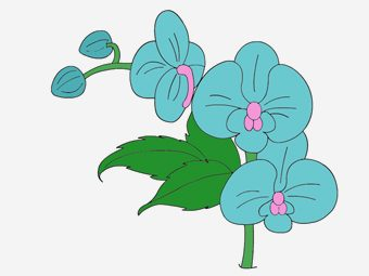 10 Beautiful Orchid Coloring Pages For Your Toddler