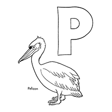 Pelican Coloring Page - P For Pelican