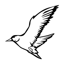 Seagull Coloring Page - Pacific Gull