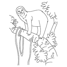 Sloth Coloring Page - Pale-Throated Sloth