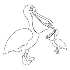 Pelican-16