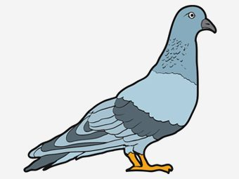 10 Cute Pigeon Coloring Pages For Your Little One