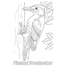 Pileated Woodpecker On tree Printable Coloring Page