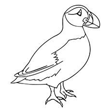 Puffin Image to Color