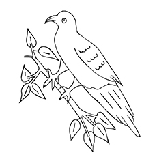 Racing Pigeons Bird Picture to Color