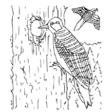 Printable Coloring Page of Red Cockaded Woodpecker Drilling the Wood