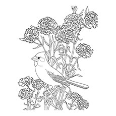 Red Crested Cardinal Coloring Page