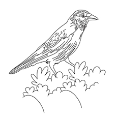 Crow Coloring Page - Rook
