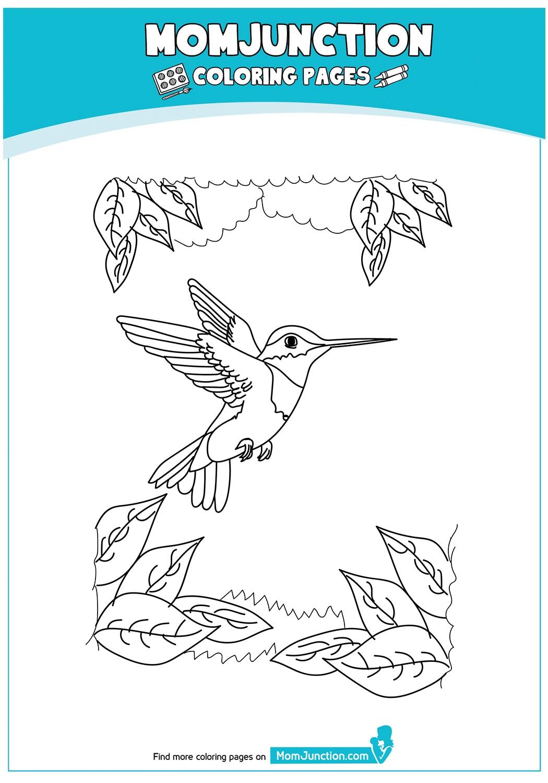 Ruby-Throated-Hummingbird-17