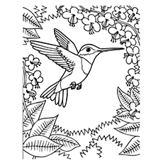hummingbird coloring pages ruby throated hummingbird