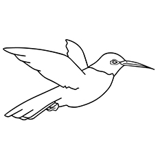 Hummingbird Coloring Pages - Rufous Hummingbird