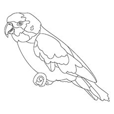 Macaw Coloring Page - Scarlet Macaw