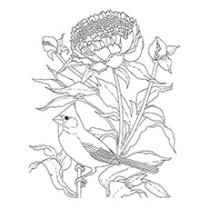 Cardinal Coloring Page - Scarlet Tanager