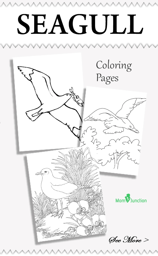 10 Beautiful Seagull Coloring Pages For Your Toddler