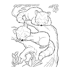 Sleeping Raccoon Coloring Page