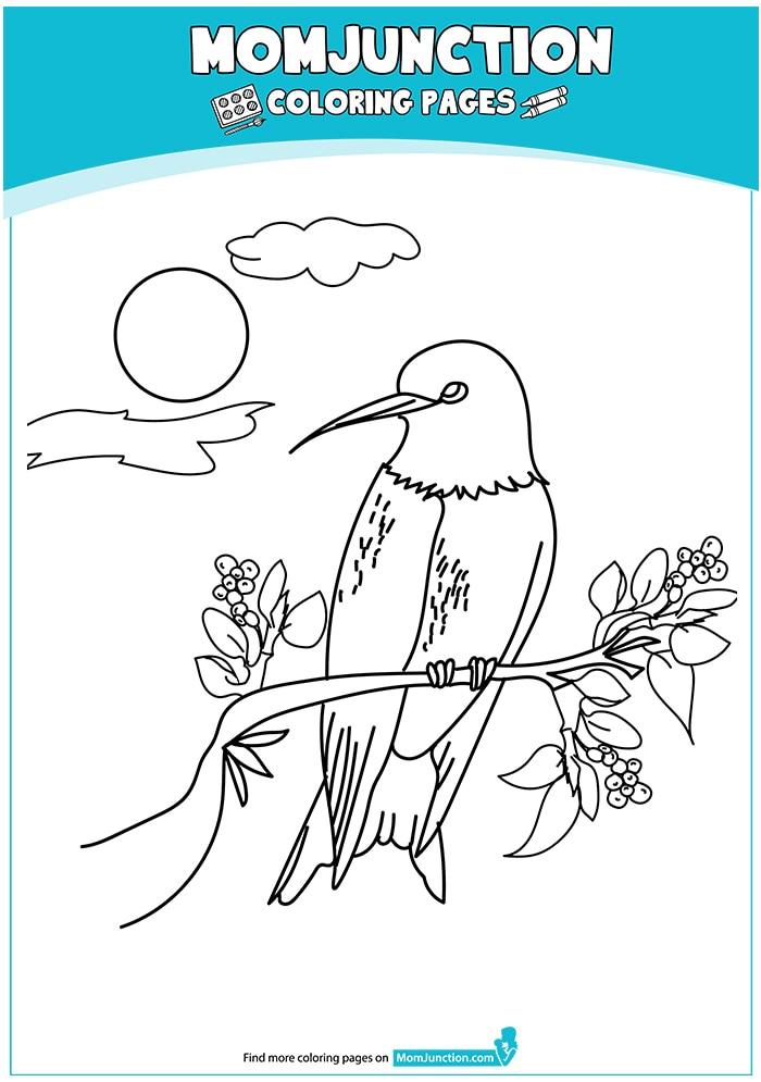 Swallow-Tailed-Hummingbird-16