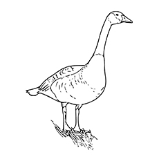 The Goose Coloring Page