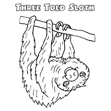 Three-Toed Sloth Coloring Page