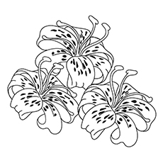 Lily Coloring Pages - Tiger Lily