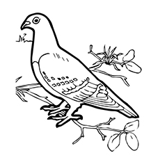 Charmant Tippler Pigeon Coloring Page