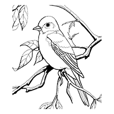 Tropical Mockingbird Coloring Page