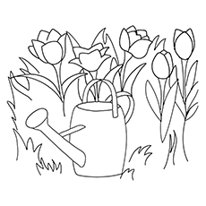 Tulips Of Netherlands Coloring Page