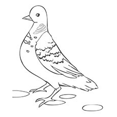 Turtle Dove Coloring Page