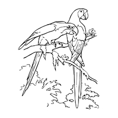 Macaw Coloring Page - Two Macaws