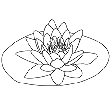 Lily Coloring Pages - Water Lily