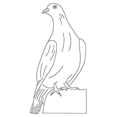 White-Winged Dove Coloring Page