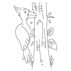 Woodpecker Drilling the Wood Coloring Page
