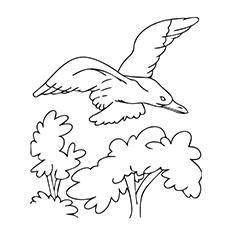 Seagull Coloring Page - Yellow-footed Gull