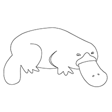 A Cute Platypus Coloring Page