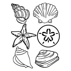 Clam Coloring Page - A Sea Shells
