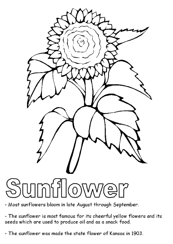 A-Sunflower