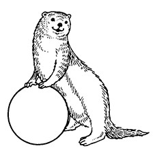African Clawless Otter Coloring Page