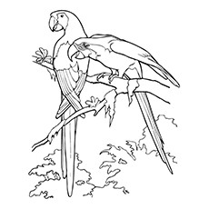 African Grey Parrots Sitting on Branch Coloring Pages