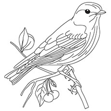American Tree Sparrow Coloring Page