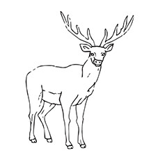 Elk Coloring Pages Coloring Pages