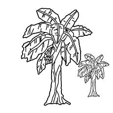 Banana-Tree-16