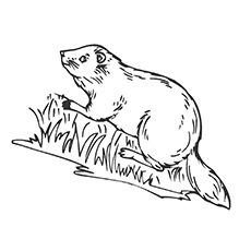 Coloring Sheet of Beaver climbing The Tree
