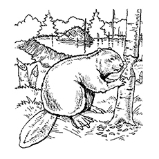 Image of Beavers Gnawing Trees to Color