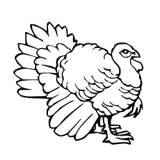 Coloring Sheet of Black Turkey