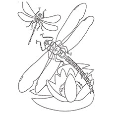 Dragonfly Coloring Page - Blue-Eyed Darner